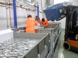 Температура воздуха рыбном заводе